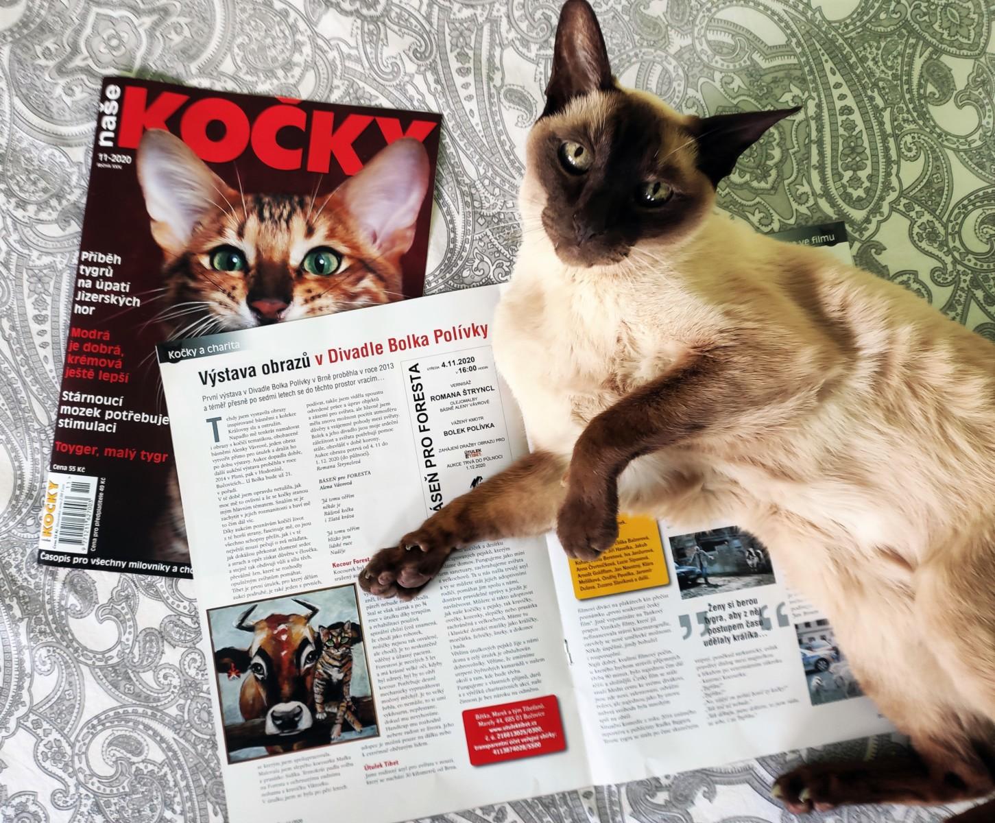 Naše kočky 11/2020